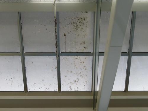 金沢競馬場3階のハトの糞