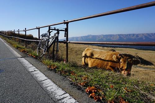 ウッシと自転車
