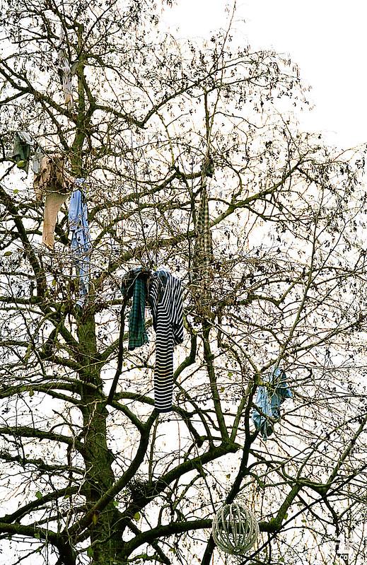 [23 Décembre 2017] – Un jour, une photo : L'arbre à loques, une croyance enracinée à Rennes ?