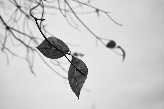 冬葉 :  SIGMA DP2x