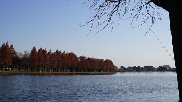 DSC05863水元公園