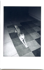 Instax Pup