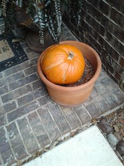 Need to toss the last Halloween pumpkin soon.
