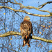 Red Kite 40 by Magic Moments by Pippa