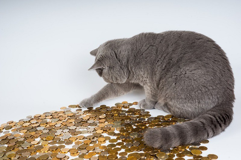 171222 猫でもわかるハピタス完全解説|なぜハピタスは年20万ANAマイル貯められるのか