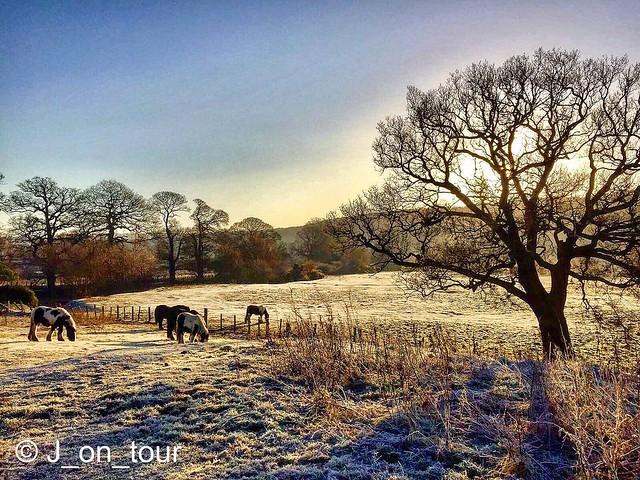 Horses grazing GJC_IMG_7227