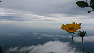 Flower above clouds