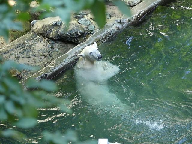 Noria, Zoo Brno