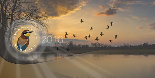 Bandeau Les Amis du Domaine des Oiseaux Flickr V2018