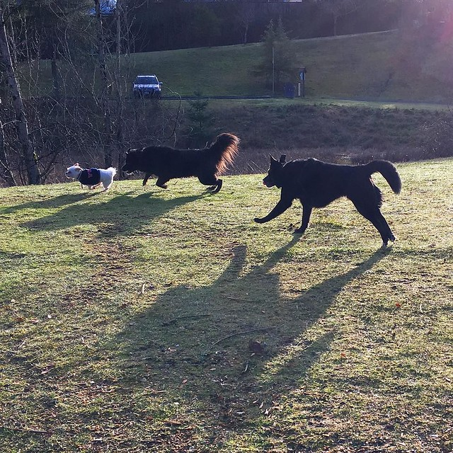 Maggie and Bear Cub in hot pursuit of their little friend Bubba.