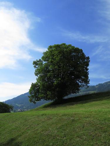 20170614 04 399 Jakobus Wolke Hügel Weg Wald Wiese