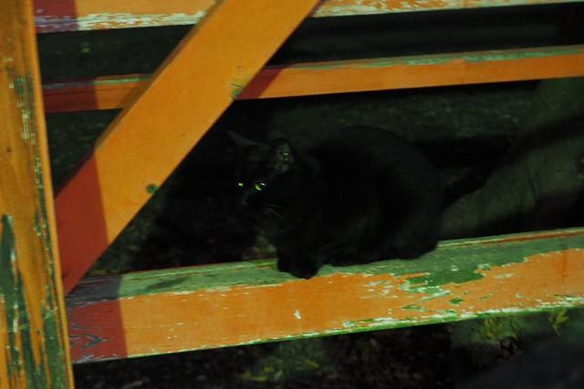 Today's Cat@2017-12-24