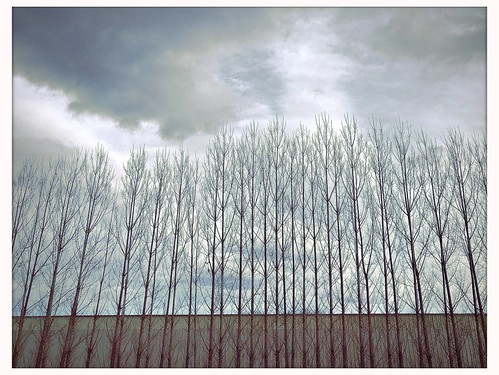 Winter's Trees