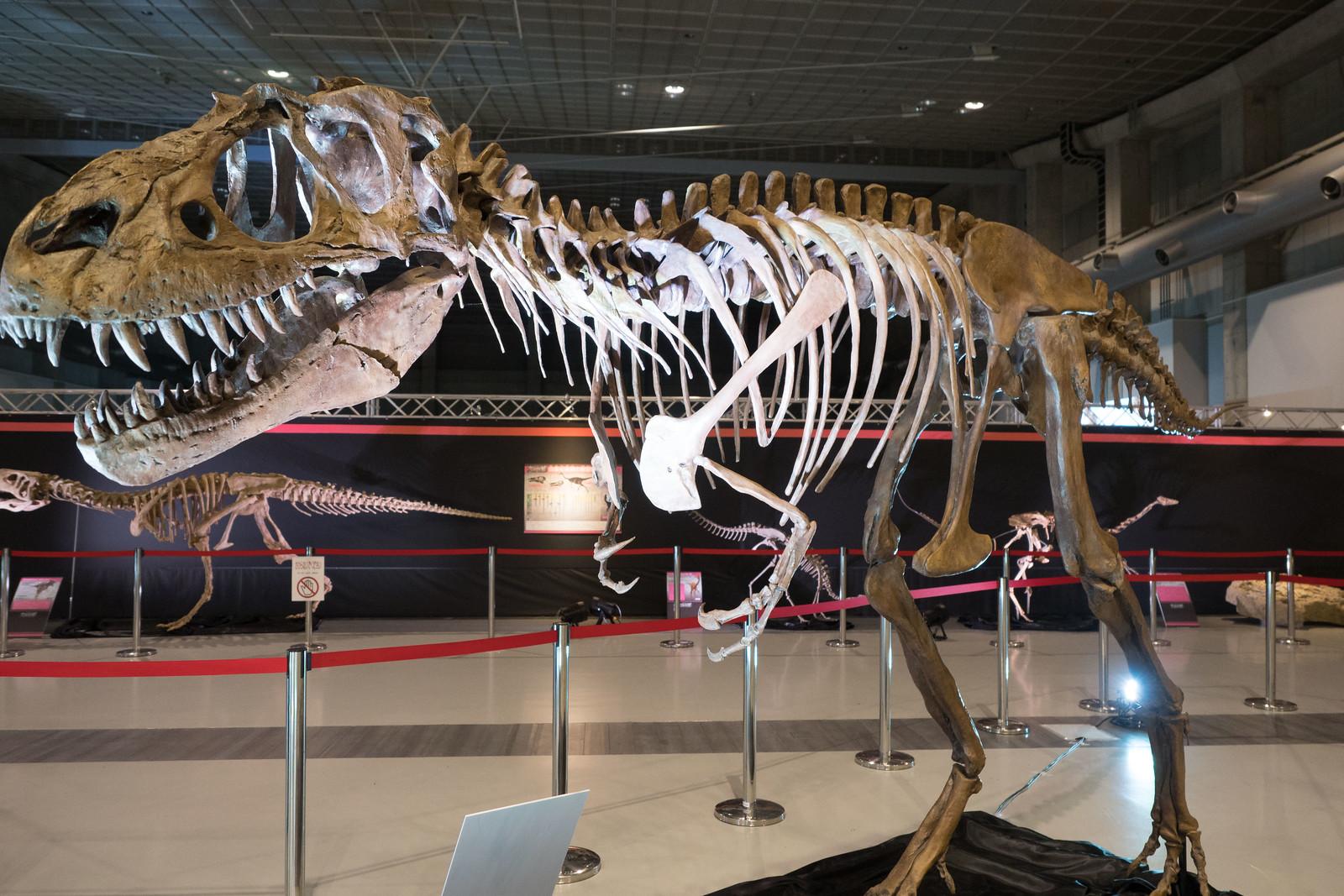 大恐竜博-45