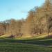 The Golden Valley at Ashridge...