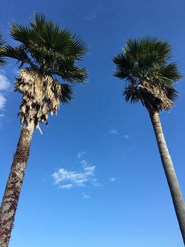 沖縄に行ってるみんなは元気だろうか