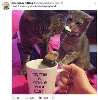 Helfpul cats