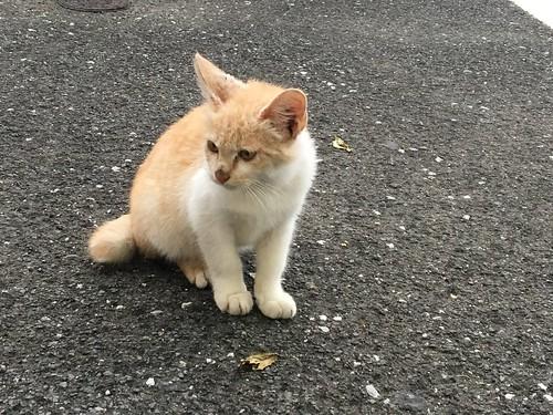 本当にネコはどこにでもいる(3)