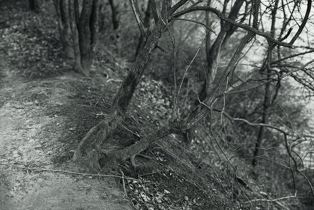 laid back trees