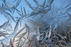 Window frost