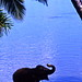 An Elephant's happy hour