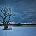Lonley Tree by markstrachan1