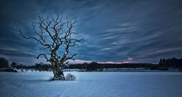 Lonley Tree