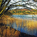 Butterstone Loch Landscape