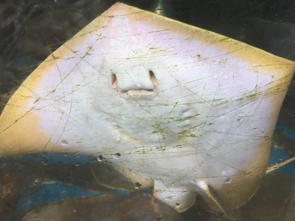 ray-fish1