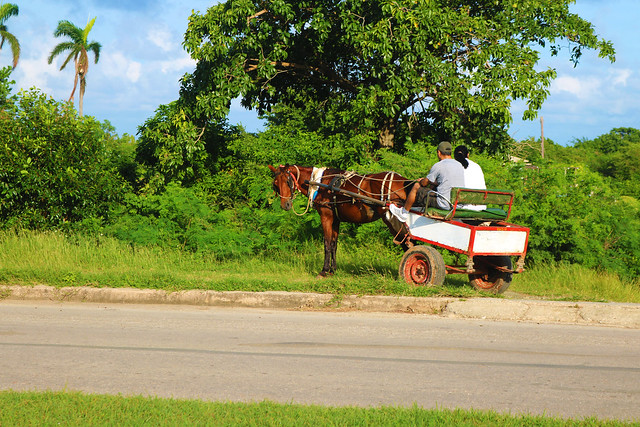 Cuba horse and buggy