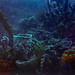 Dominica Dive-3