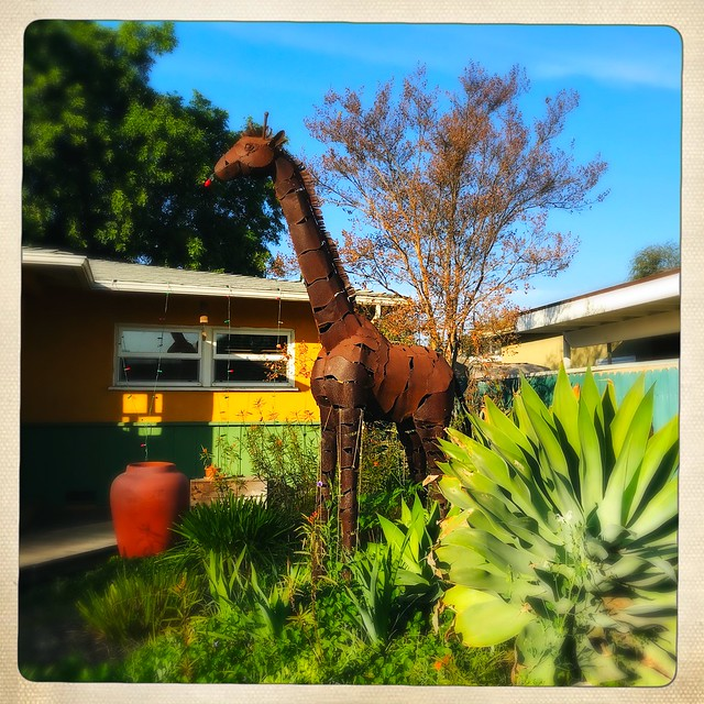 Red-nosed Giraffe