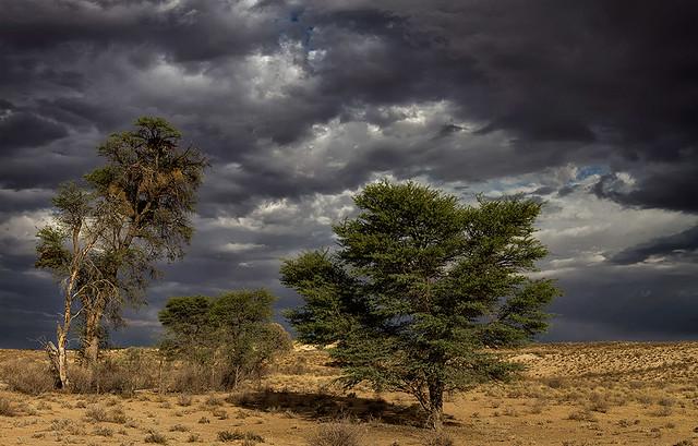 Kgalagadi Storm Clouds