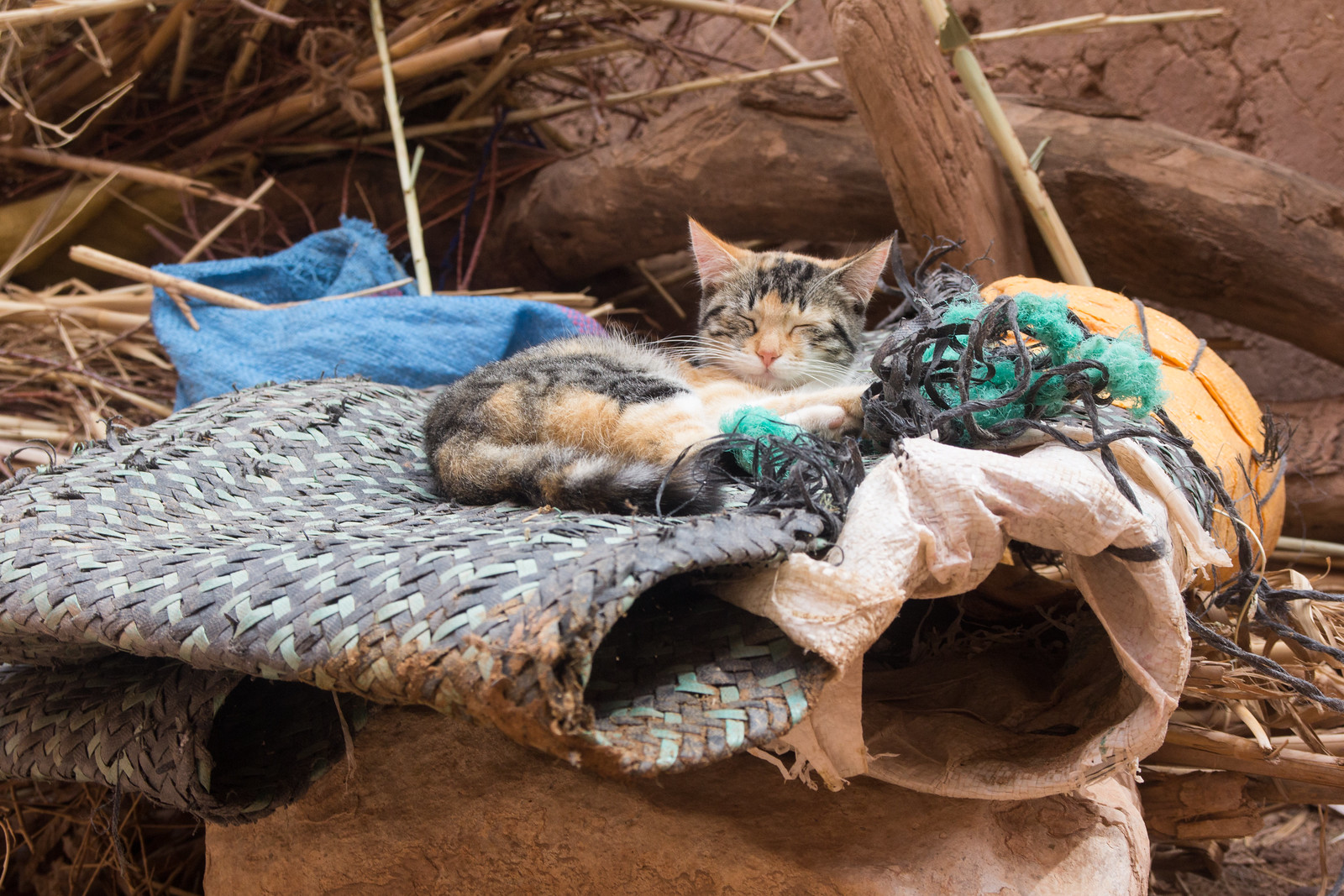 Sleeping Cat, Aït Benhaddou