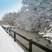 Shropshire snow