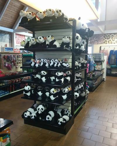 Gift shop #toronto #torontozoo #pandas #plush #giftshop #latergram