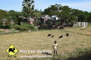 Train entre Kyaik-Hti-Yo et Mawlamyaine Birmanie Myanmar