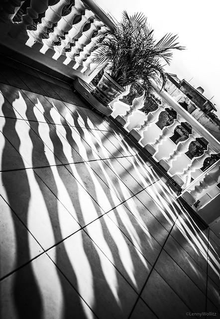 Morning Shadows, Sombras de la mañana