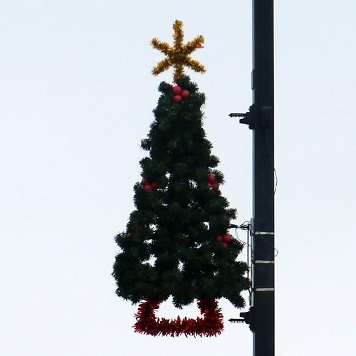 Princeton tree square