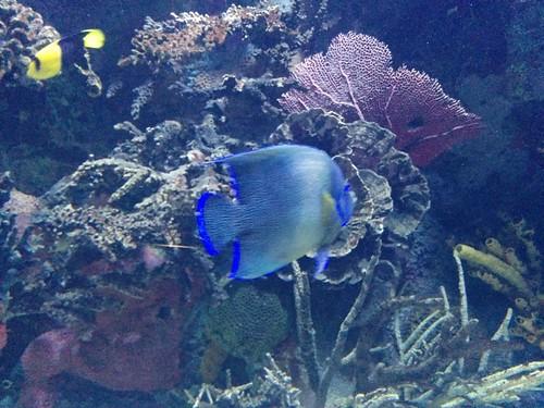 Reef (2) #toronto #torontozoo #fish #coralreef #latergram