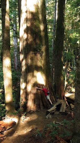 Al hugs a big cedar tree at Avatar Grove near Port Renfrew on Vancouver Island, Canada