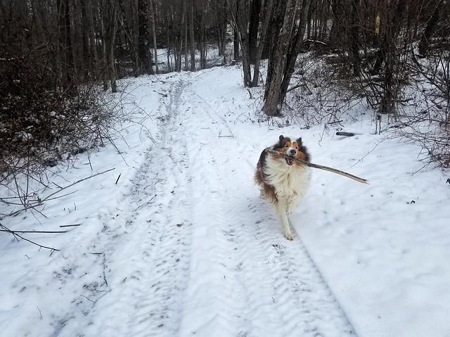Snow Ben, 2018