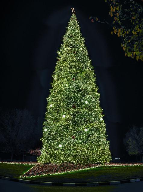 corporate christmas tree