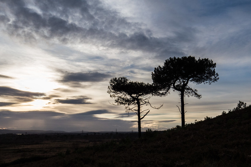 Sundown over Upton Heath