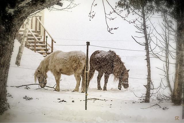 Snow Storm in St, Nikon D7100, AF Zoom-Nikkor 75-300mm f/4.5-5.6