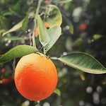 🍊 by bartlewife