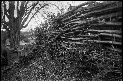 fence splitrailfence oldtree overcast asheville northcarolina olympusxa aristaedu200 moerschecofilmdeveloper 35mm film rangefinder compactcamera blackandwhite monochrome monochromatic urbanlandscape