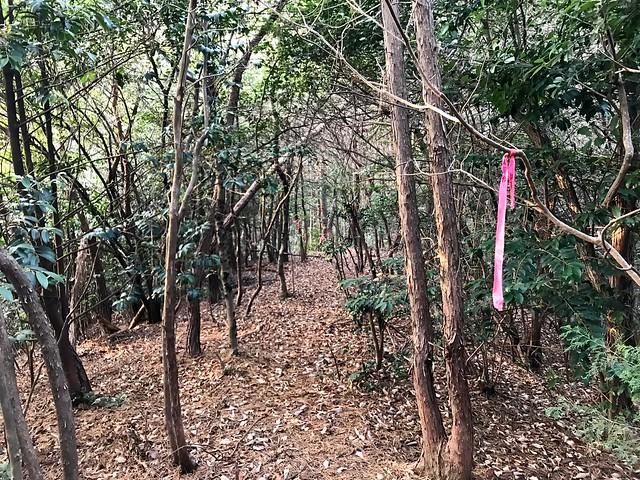 源太峰 登山道 ピンクリボン