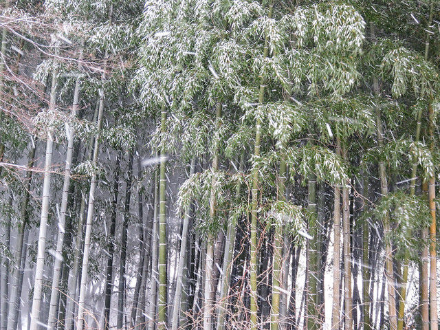 Blizzard in a bamboo grove