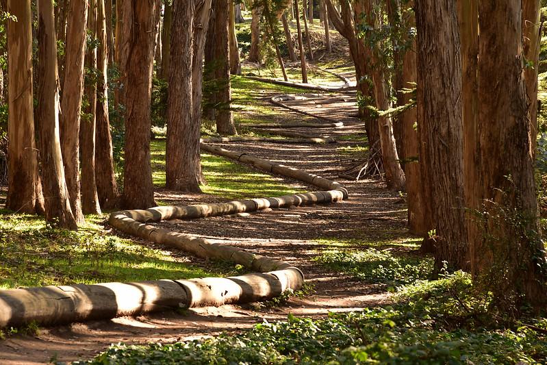 """Wood Line"" (2)"